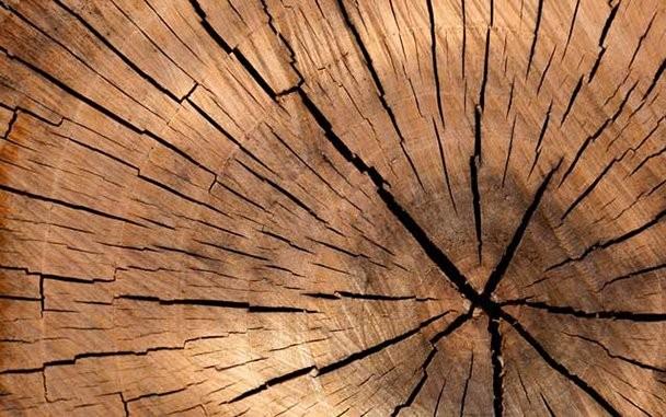 Vero legno per tutti